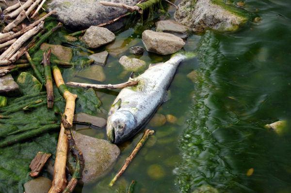 Contaminacion agua como reducir