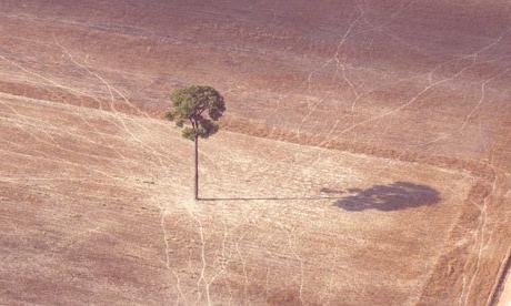 cambios-climaticos-biodiversidad