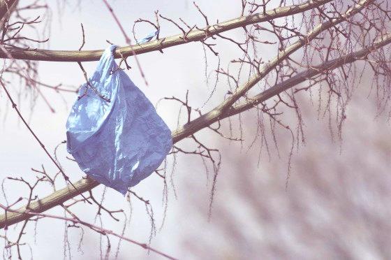 reciclar-bolsas-plastico-arbol