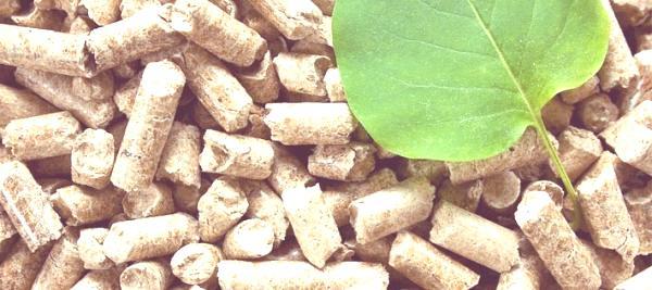 tipos-de-energias-renovables-resumen-energia-biomasa