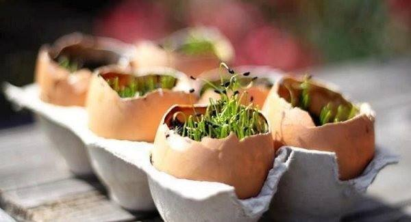 maceta con caja de huevos