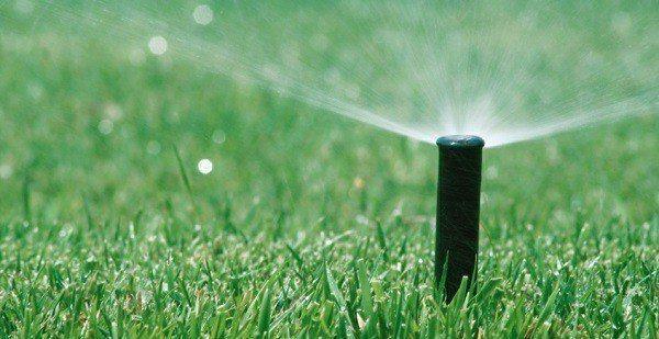 ahorrar agua jardin