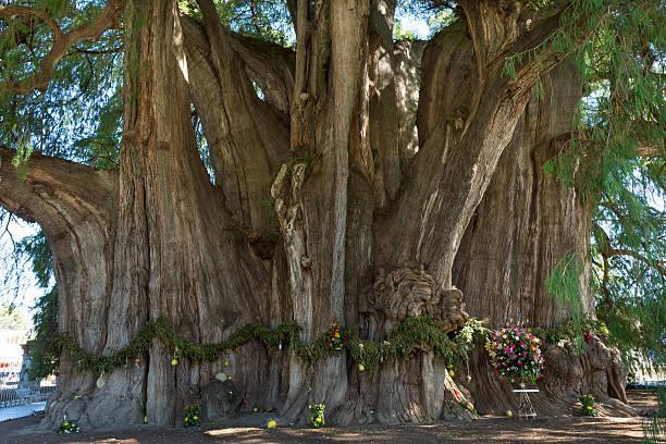 Los 20 árboles Más Importantes Del Planeta Erenovable Com