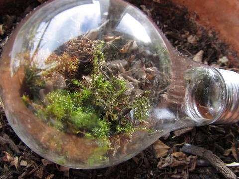 12-bonitas-formas-de-tener-plantas-de-interior-bombilla