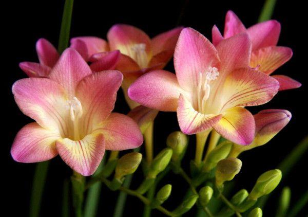 cuales-son-las-flores-de-invierno-fresilla