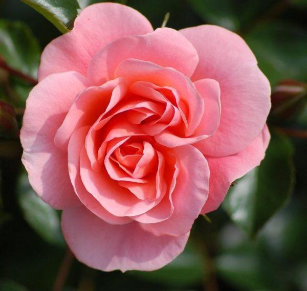 cuales-son-las-flores-de-primavera