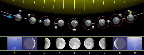 cuando-es-cuarto-creciente-como-son-las-fases-lunares