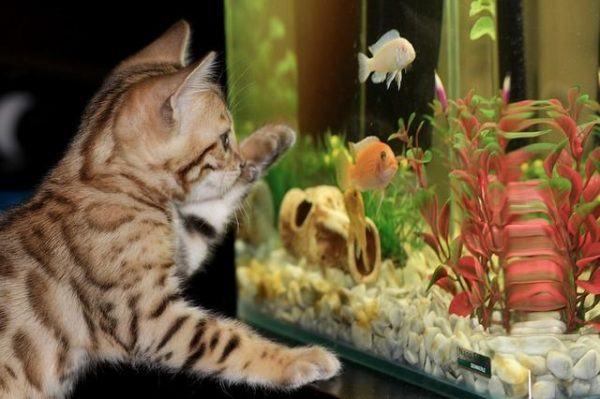 como-decorar-un-acuario-con-materiales-reciclados-gato