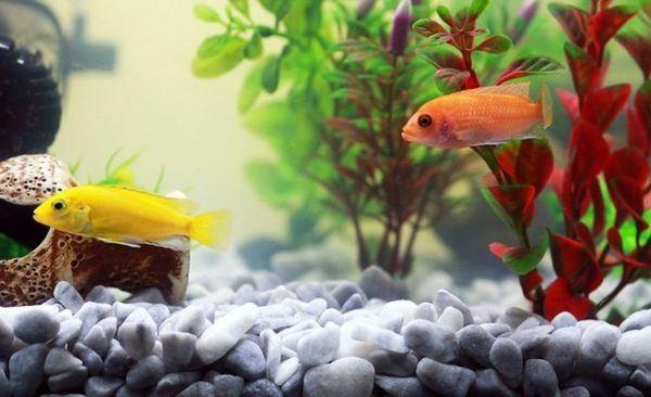 como-decorar-un-acuario-con-materiales-reciclados-pez-amarillo-naranja