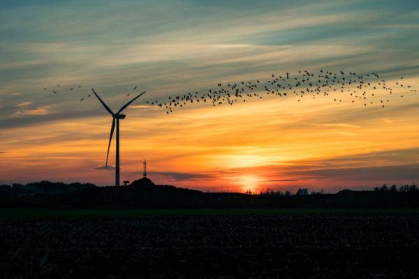 Energía eólica y pájaros