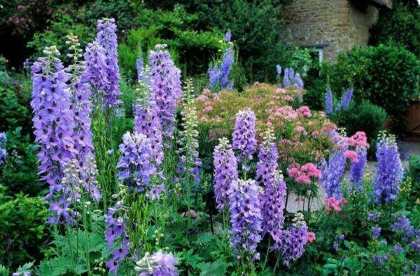 Flores de verano Delphinium