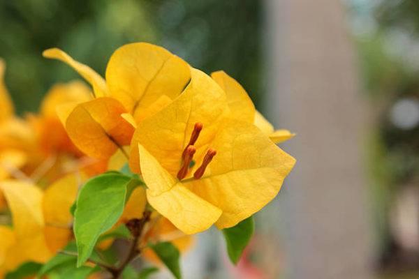 Como hacer las mejores flores de papel con material reciclado papel seda