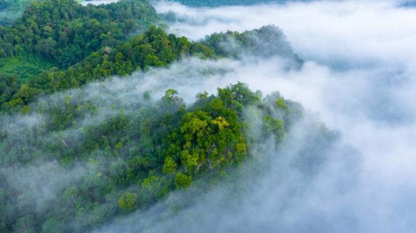 Razones por las que los bosques importantes
