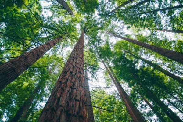 Razones por las que los bosques son importantes