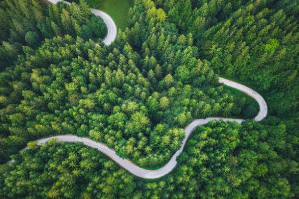 Razones por que los bosques son importantes