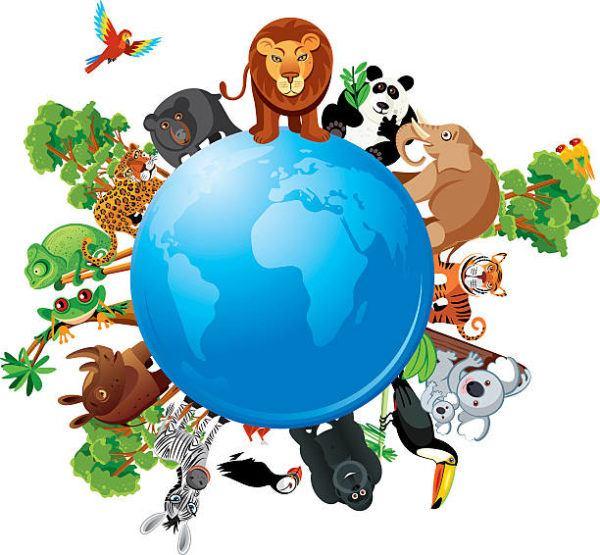 Mejores dibujos medio ambiente animales especies