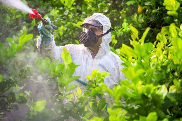 Plantas mas venenosas podrian matarte