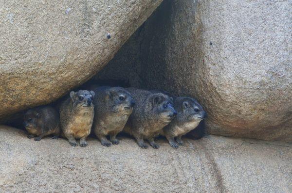 Que es dia marmota groundhog day como celebra