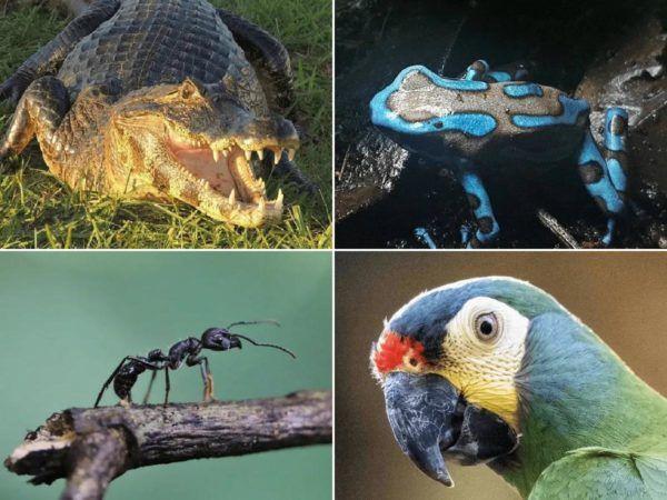 Animales que solo existen en el Amazonas portada