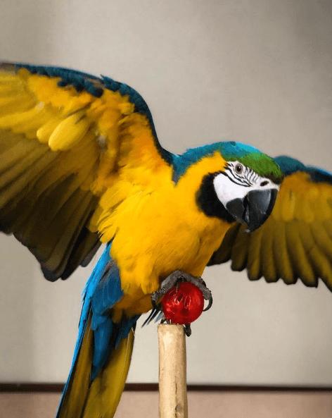 Animales que solo existen en el Amazonas tucán