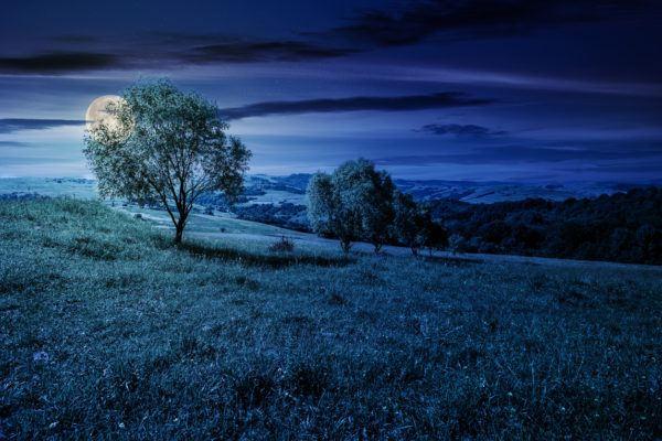 El calendario lunar para huerto y el jardin