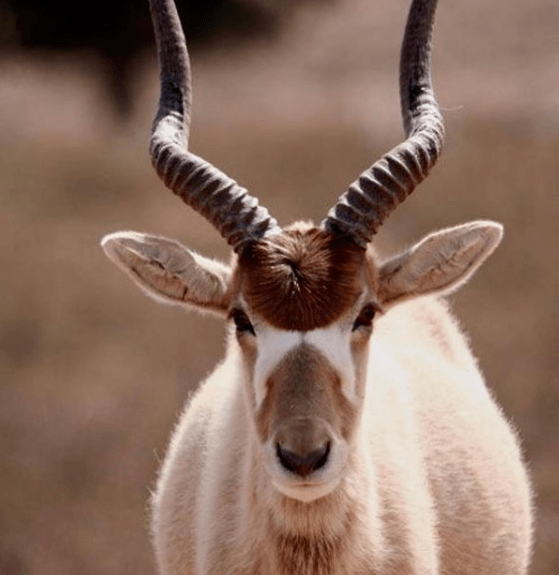 Animales que solo existen en el Desierto Addax