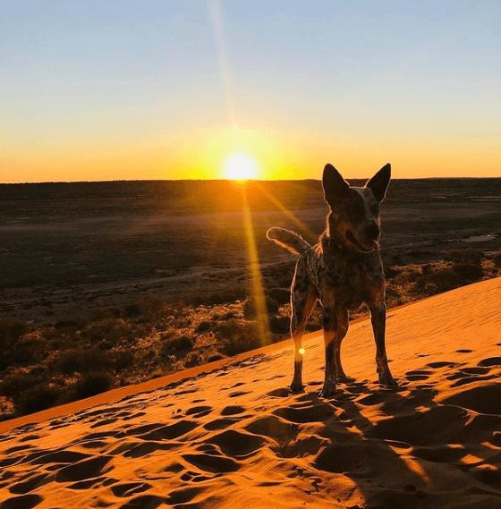 Animales que solo existen en el Desierto Dingo