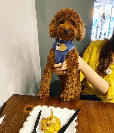 Beneficios y recetas de comidas caseras para perros precio