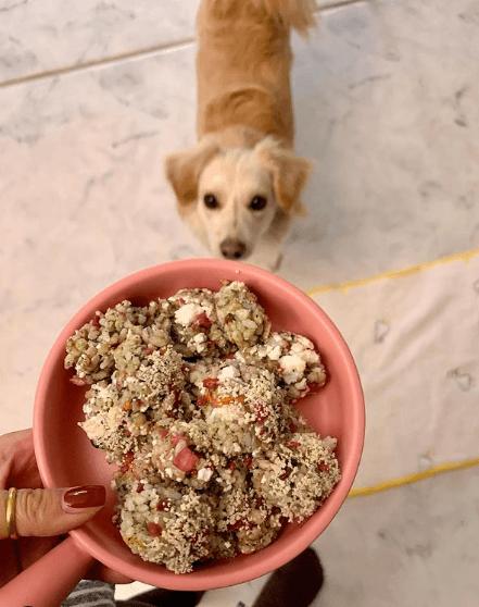 Beneficios y recetas de comidas caseras para perros inconvenientes