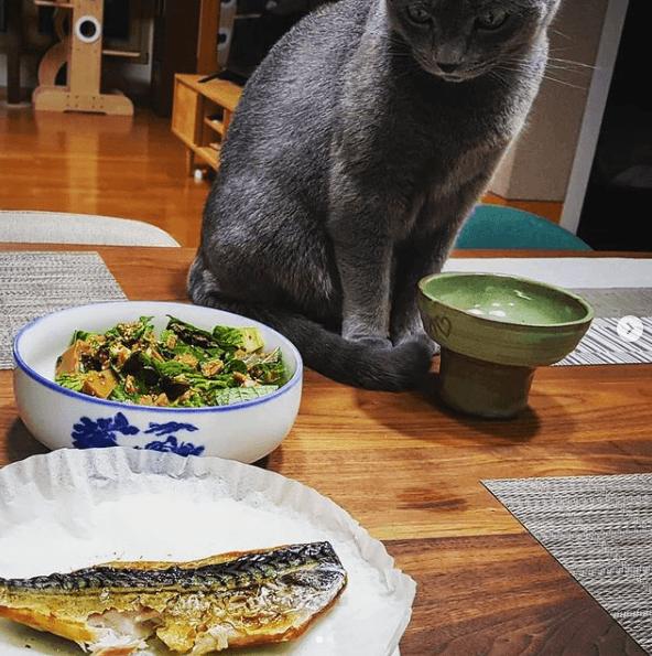 ¿Cuáles son los beneficios de la comida casera para gatos? Aquí tienes algunas recetas de comida casera para gatos ahorro