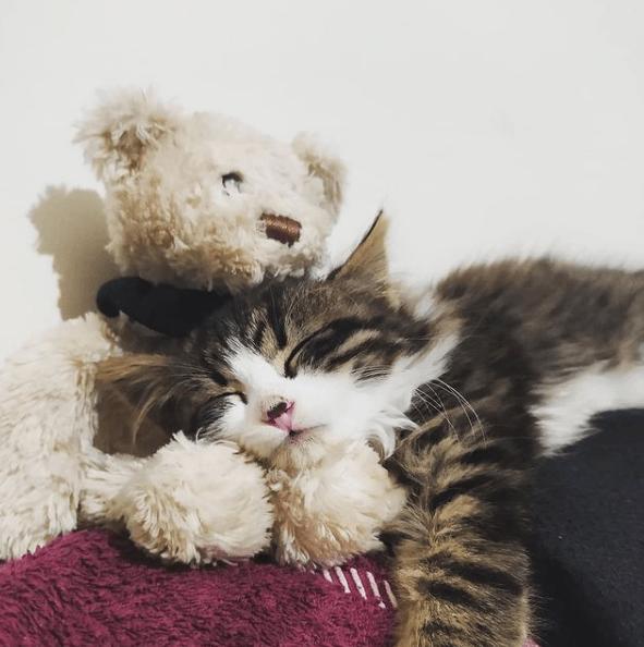 ¿Cuáles son los beneficios de la comida casera para gatos? Aquí tienes algunas recetas de comida casera para gatos sabor