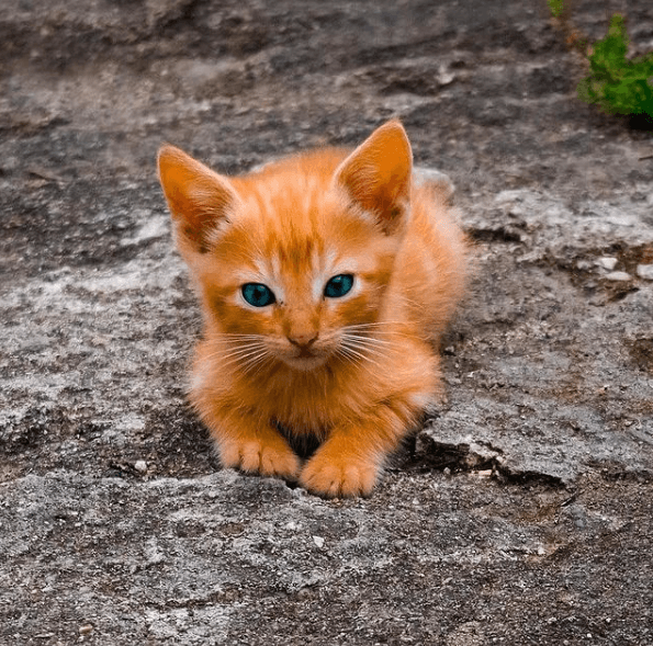 ¿Cuáles son los beneficios de la comida casera para gatos? Aquí tienes algunas recetas de comida casera para gatos