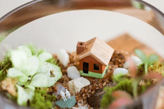 Los mejores trucos y consejos para hacer nuestro terrario musgo