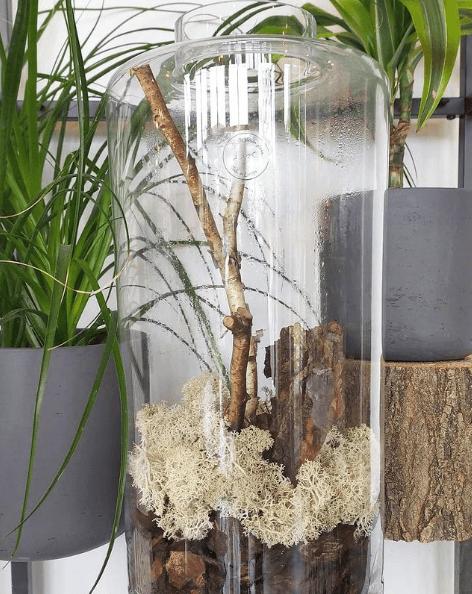 Los mejores trucos y consejos para hacer nuestro terrario troncos