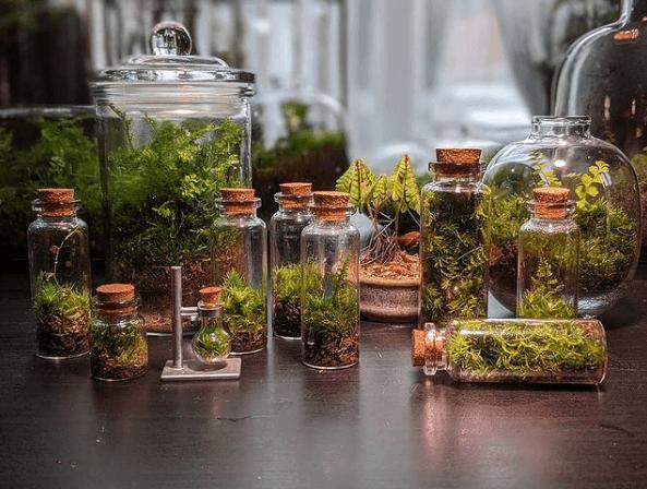 Los mejores trucos y consejos para hacer nuestro terrario pequeños