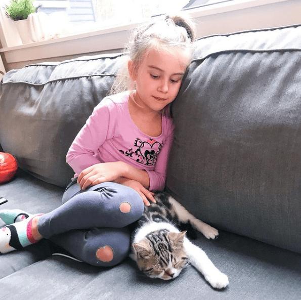 Alergias en Gatos: síntomas, pronóstico y tratamiento acaros