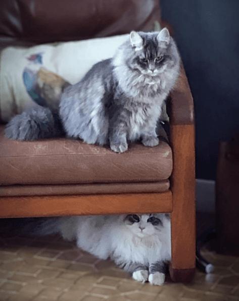Alergias en Gatos: síntomas, pronóstico y tratamiento veterinario