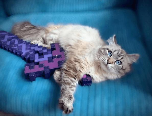 Alergias en Gatos: síntomas, pronóstico y tratamiento revisión