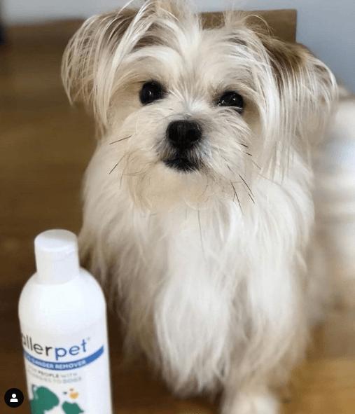 Alergias en Perros: síntomas, pronóstico y tratamiento champús