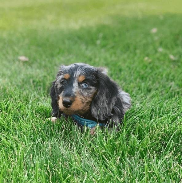 Alergias en Perros: síntomas, pronóstico y tratamiento ácaros