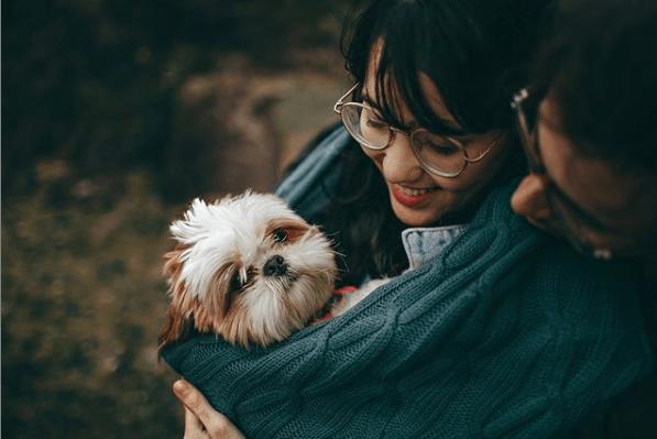 Alergias en Perros: síntomas, pronóstico y tratamiento picazón