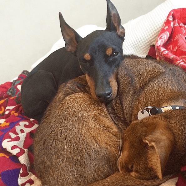 Alergias en Perros: síntomas, pronóstico y tratamiento sarpullido