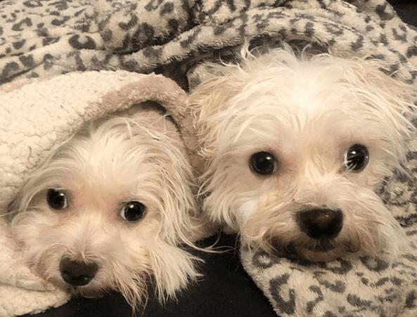 Alergias en Perros: síntomas, pronóstico y tratamiento letargo