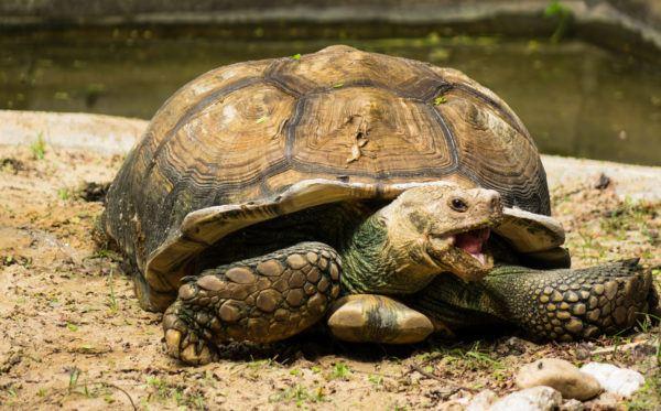 Animales peligro extincion deforestacion tortuga