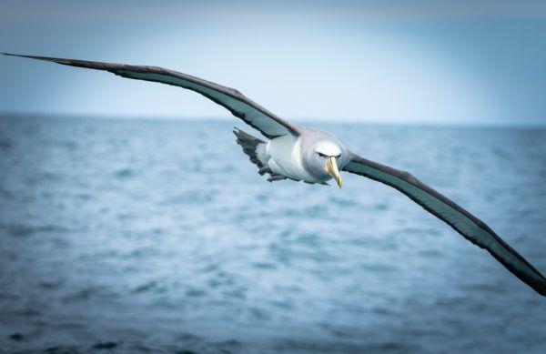 Animales que viven en la antartida albatros