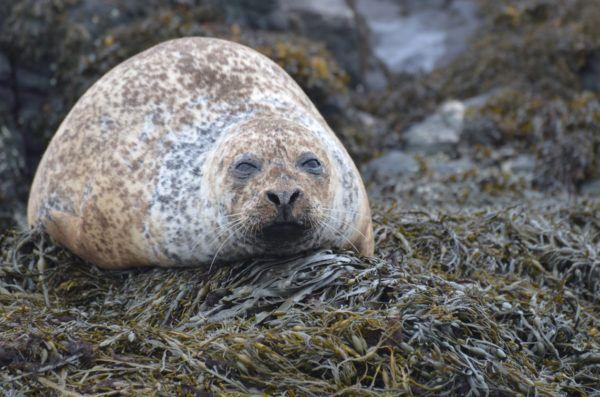 Animales que viven en la antartida focas leopardo