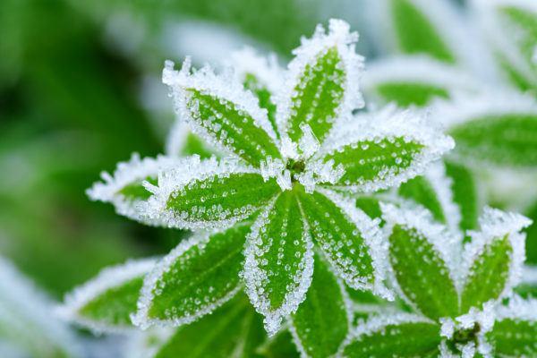 Como cuidar plantas casa para que no mueran heladas