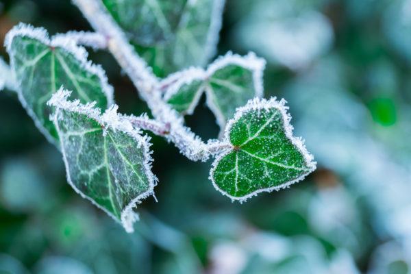 Como cuidar plantas casa para que no mueran por heladas