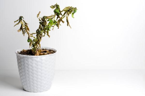 Como podemos cuidar las plantas casa para que no mueran por heladas
