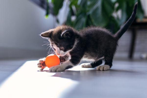 Dia internacional gato cuando es porque se celebra cuales son las mejores celebrarlo